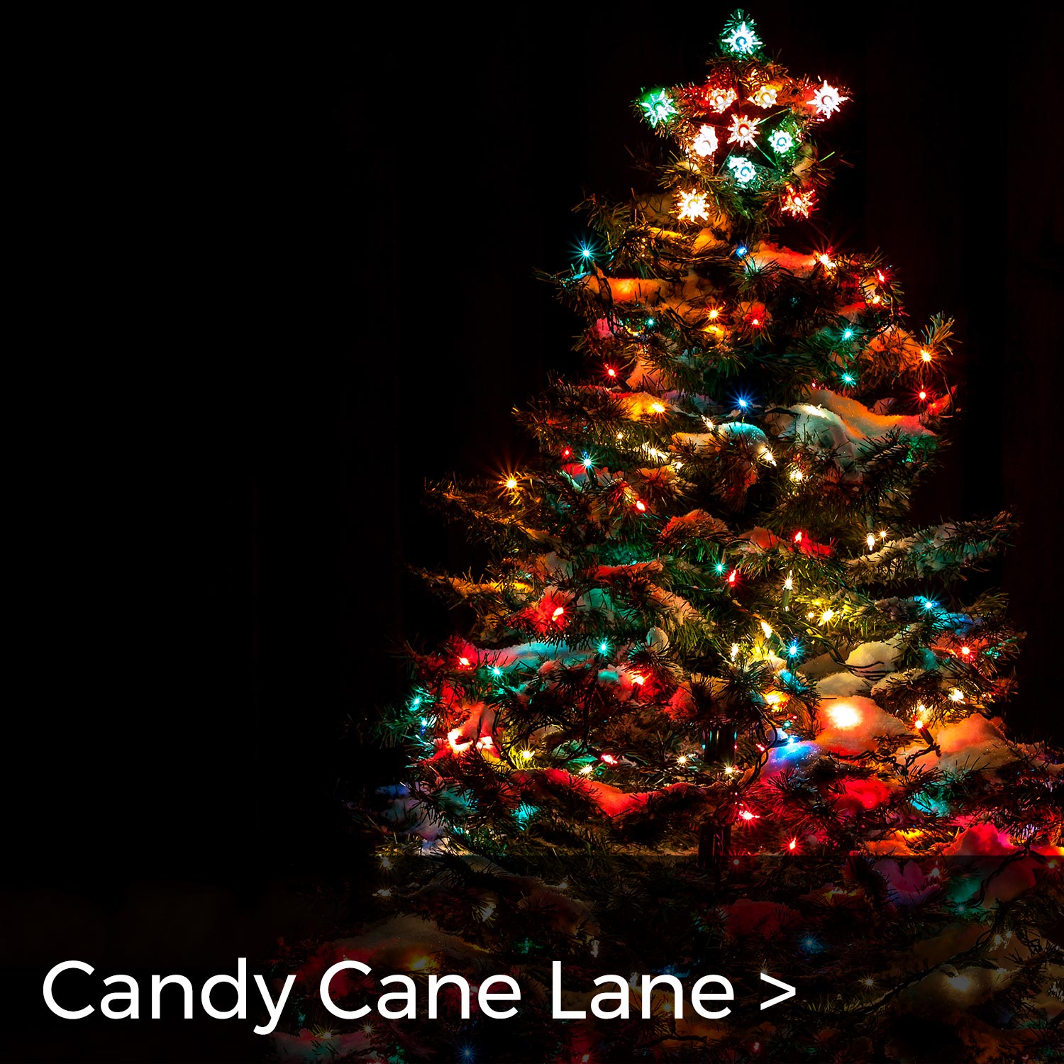 MACC Fund Candy Cane Lane